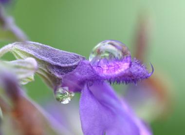 Lavender08u