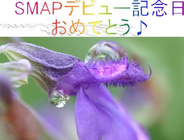 Lavender08smap