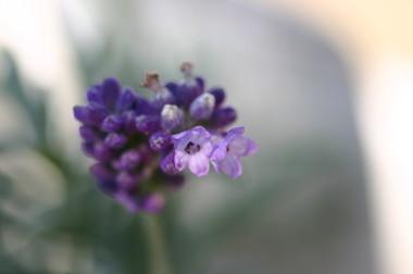 Purpleimg_0005_2