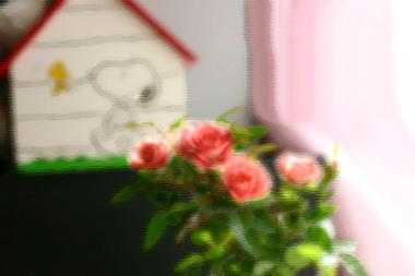 Img_9026_003