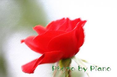 Dpp_r00561